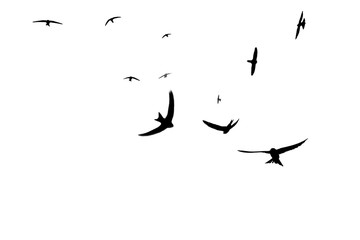Silhouettes of birds isolated on a white background