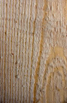 Woodeen pine tree txture