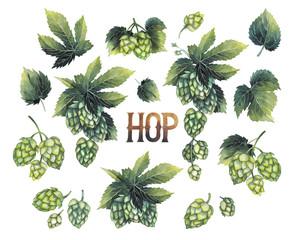 Watercolor hops collection