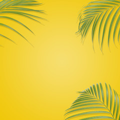 Tropical palm leaves on yellow background. Minimal nature. Summer Styled.  Flat lay.  Image is approximately 5000 x 5000 pixels in size