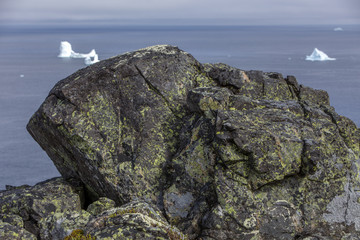rock with green lichens on high hill overlooking Atlantic Ocean with icebergs; Fogo Island, Newfoundland