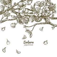 Beautiful romantic background. Branch of sakura. Falling petals of cherry blossoms. Engraving. Vector illustration.