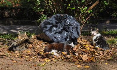 cats sleeping in the leaves outdoor, autumn