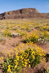 Wildflowers Steamboat Rock Eastern Washington