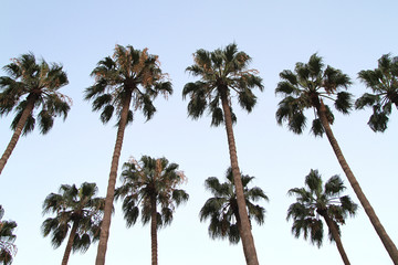 Palm trees on blue sky