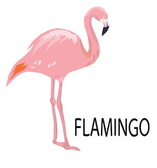 vector pink flamingo