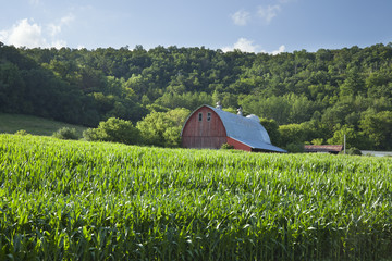 Old red barn near cornfield below wooded hills on a sunny summer afternoon