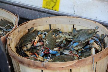 Fresh crabs for sale
