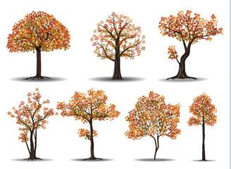 red autumn tree