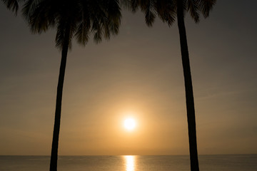 palm trees on the background of  beautiful sunset or sunrise,for summer background and design.