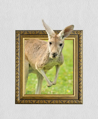 Kangaroo in frame with 3d effect