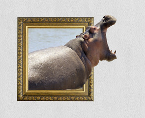 Hippo in frame with 3d effect