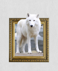 Arctic wolf in frame with 3d effect