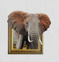 Elephant in frame with 3d effect