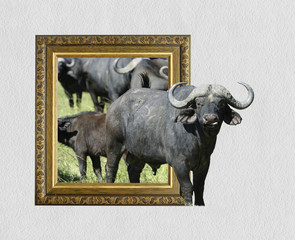 Buffalo in frame with 3d effect