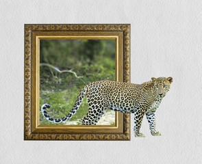 Leopard in frame with 3d effect