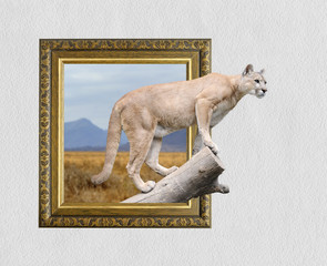 Puma in frame with 3d effect