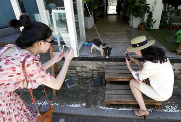Women take pictures of a pet pig at the entrance of a clothes shop in Beijing's 798 art area