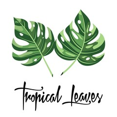 Tropical leaves with an inscription. Vector illustration.
