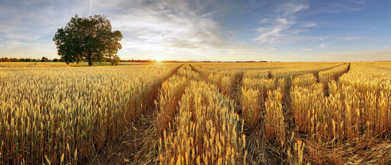 Fototapeten Landschappen Rural landscape with wheat field on sunset