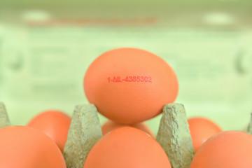 Eier - Herkunft