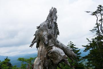 枯れた樹木