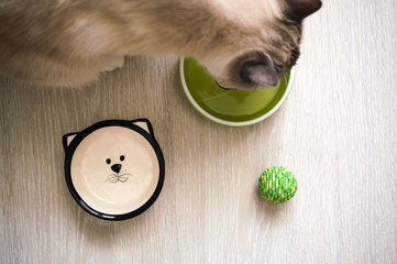 Dry cat food in a green porcelain bowl on a gray wooden floor
