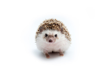 Hedgehog on the White Background Wall mural