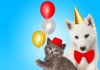 Cat and dog together with birthday party hats, Scottish kitten, Husky puppy. Blue background