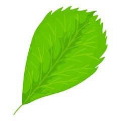 Elm leaf icon, cartoon style