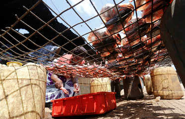 A trader dries fish skeleton for sale on a wire mesh ahead of the Presidential election in Kibera slums of Nairobi