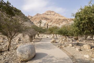 Wadi David, dead sea, Israel
