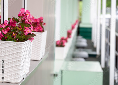 A background with flower pots with small pink flowers stock photo a background with flower pots with small pink flowers mightylinksfo