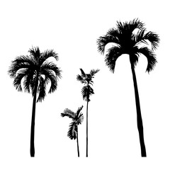 set of silhouette realistic palm tree, nature illustration, vector summer sign