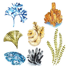 Coral set. Aquarium concept for Tattoo art or t-shirt design isolated on white background.