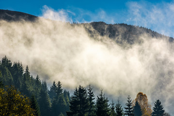 cloud rising up from the forest in autumn morning