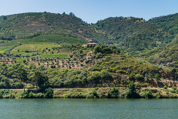 View of Douro Valley, Portugal.