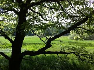Garden Poster Sheep Baum vor wilder Waldwiese