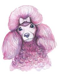 Акварельная иллюстрация розового пуделя, милая собака на белом фоне, домашний питомец
