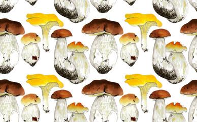 Mushrooms set isolated on white background, Hand painted illustration, Autumn background