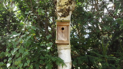The birdhouse weighs on the birch