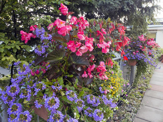 Blühende Blumen in Pflanzkästen auf der Terasse