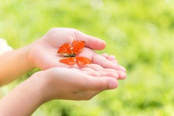 Pretty little butterfly in hands of girl