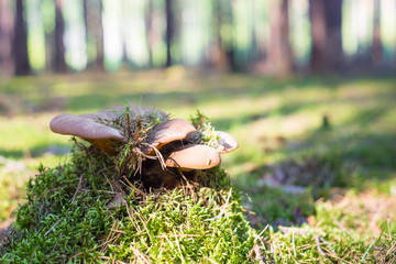 Rosnący grzyb w lesie