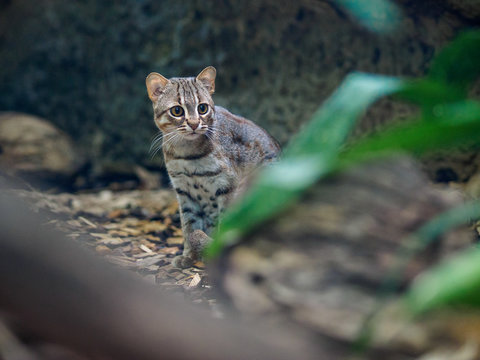 Rusty cat in zoo