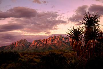 Organ Mountains Sunset Fotoväggar