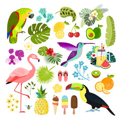 Summer tropical graphic elements. Parrot, toucan and flamingo bird. Jungle floral illustrations, palm leaves, hibiscus, flowers, tropical fruits and plants. Isolated vector illustration.