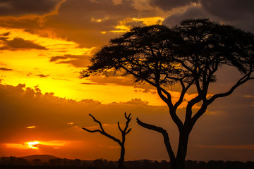 Wall Mural - Sunset in Africa.