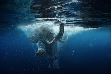 Fotorolgordijn Olifant Swimming African Elephant Underwater. Big elephant in ocean with air bubbles and reflections on water surface.