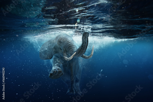 Wall mural Swimming African Elephant Underwater. Big elephant in ocean with air bubbles and reflections on water surface.